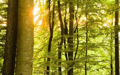 Tudtad, hogy a fák is kommunikálnak egymással?
